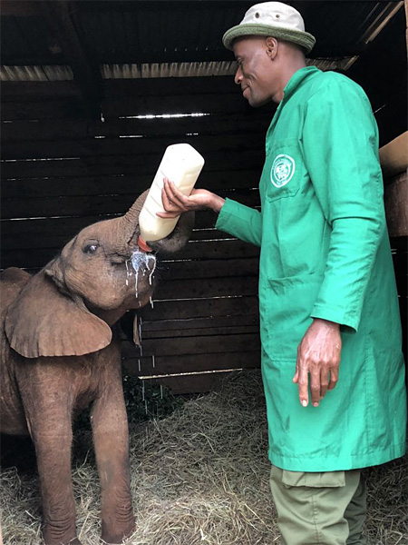 Feed baby elephant